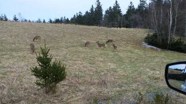 April Deer_2