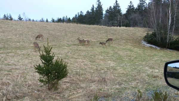 April Deer_3